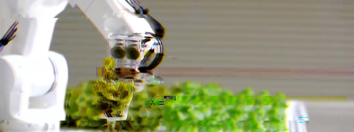 A robot arm holding a lettuce plant